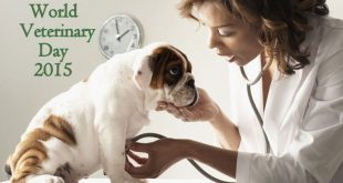 Dog being examined by a vet