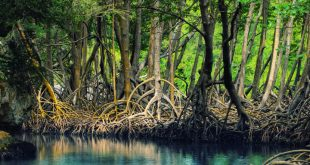 Dominican_republic_Los_Haitises_mangroves-deleted-3a0414f2fa1a4b1def31dcbed956120f-830x553